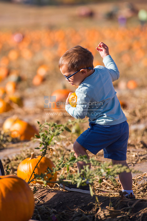 pumpkinfest and cornmaze