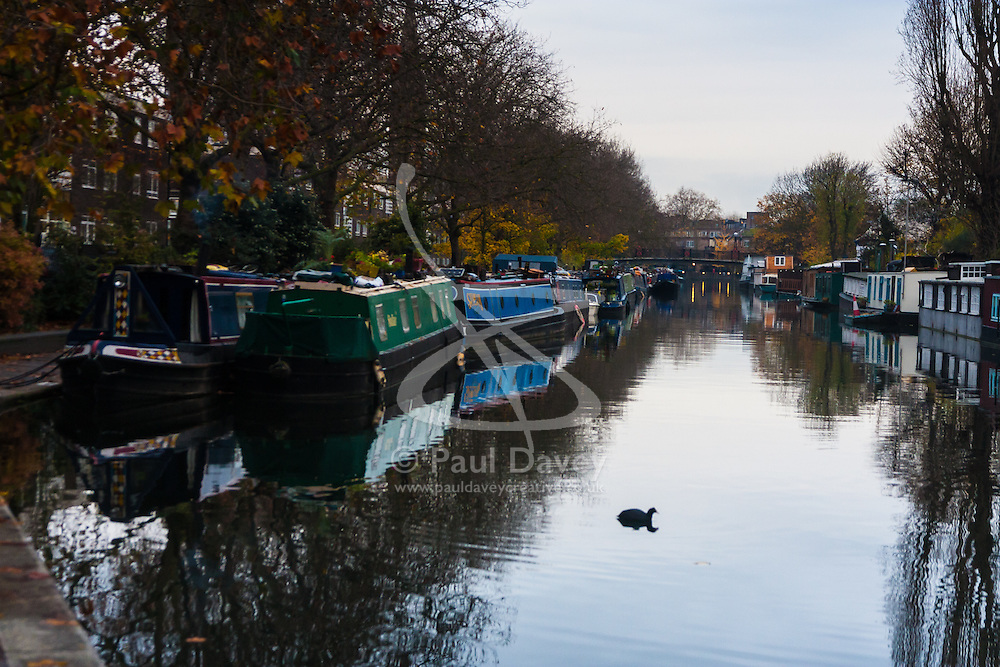 Paddington Basin, London, November 25th 2014. A coot hunts for scraps on the Grand Union Canal in London.
