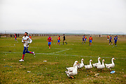 Saturday afternoon football game in Marginenii de Jos in between a local team with players mostly having Roma ethnicity and a team from another village. Geese after they entered the football field.