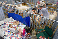 Paul Littlefield, 9, of Surprise, Neb., cools off on his bed for the night while other exhibitors move in their sheep Friday in the Sheep Barn at the Nebraska State Fair in Grand Island. (Independent/Matt Dixon)