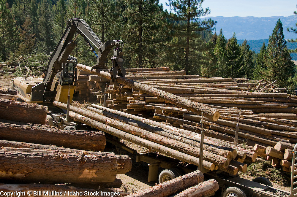 Loading log truck on timber harvest site on private land in central Idaho