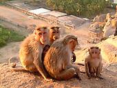 Animals - Monkeys
