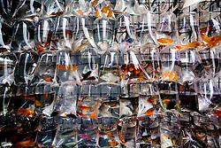 China, Hong Kong. The fish Market.© Carmen Secanella