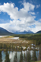 Wetlands at Saskatchewan Crossing, Banff National Park Alberta