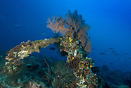 Dongala, Central Sulawesi, Indonesia, November 2010. an ancient Dutch east Indies Company VOC anchor in the bay is now covered with soft and hard corals. Being directly situated at the headland of the picturesque Bay of Palu, Central Sulawesi, Dongala is the perfect place to spend some time diving the cristal clear waters over the tropical coral reefs. Photo by Frits Meyst/Adventure4ever.com