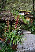 Heliconia flower, Machu Picchu Pueblo Hotel, Machu Picchu, Pueblo, Aguas Calientes,  Cusco Region, Urubamba Province, Machupicchu District, Peru
