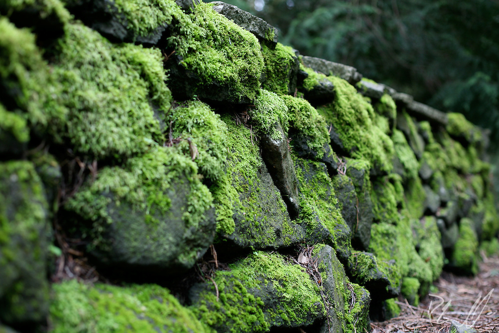 Moss Stone Wall in Portland, OR