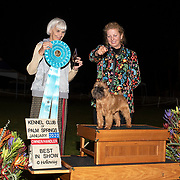Palm Springs Kennel Club 01/05/2020