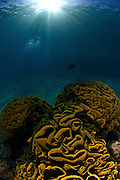 Israel, Eilat, Red Sea, - Underwater photograph of a coral reef
