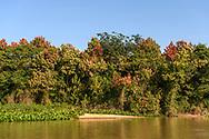 Blühende Bäume am Flussufer, Pantanal, Brasilien<br /> <br /> Blossoming trees at the riverside, Pantanal, Brazil
