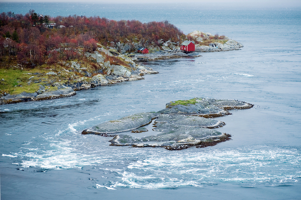 The current running out to sea, Saltstraumen<br /> Atlantic marine life, Saltstraumen, Bod&ouml;, Norway