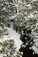 A partly-frozen stream at the Asticou Azalea Garden, Northeast Harbor, Maine.