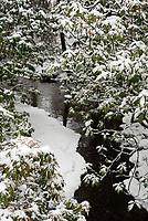 A partly-frozen stream at the Asticou Azalea Garden, Northeast Harbor, Maine.