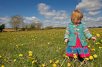 Alice Downes aged 2 years and 2 days in a field of dandelines in Mulroog, Ballindereen, Co. Galway, Ireland. Photo:Andrew Downes