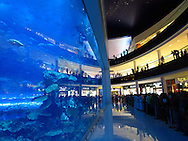 The huge aquarium in the Duabi Maill. Dubai, United Arab Emirates