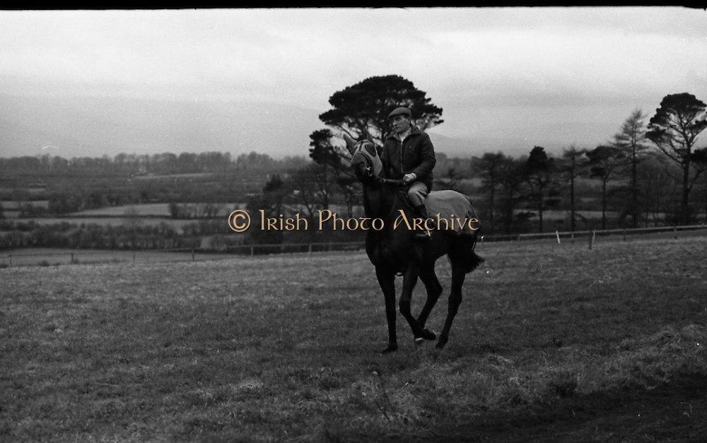 """Vincent O'Brien with 'Sir Ivor' at O'Brien Stables, Cashel. """"Sir Ivor' was owned by American businessman and U.S. Ambassador to Ireland, Raymond R. Guest. The horse was named for his British grandfather, Sir Ivor Guest, 1st Baron Wimborne. 'Sir Ivor' won three races in 1967, the Grand Criterium at Longchamp and the National Stables and the Probationers State at the Curragh. <br /> 11.03.1968"""