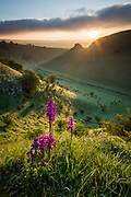 The sun breaks over Peter's Stone in Cressbrook Dale and backlights a group of Early Purple Orchids. A beautiful Spring morning in the Peak District National Park. Derbyshire, England, UK. May, 2016