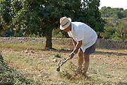 Spanien Spain,Mallorca Balearen..Finca Son Mas, Porto Cristo..Bauer mit Strohhut..farmer with straw hat....