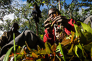 A Khat picker prepares stems to be taken to the market in Maua after which it is rushed to Nairobi.