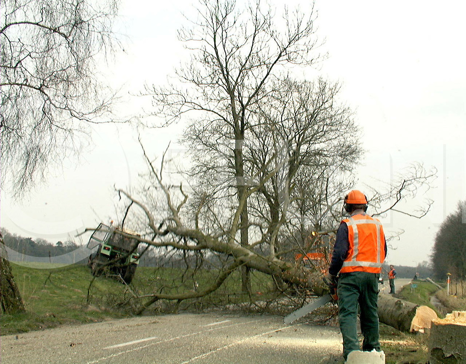 Fotografie Frank Uijlenbroekk©1999/olga van kampen.990330 vilsteren.tussen laarbrug en vilsteren het kappen van bomen wegens verkeersveiligheid, de bomen waren in slechte staat