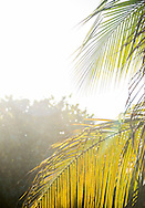 Sunlight and palm branches in Tulum, Mexico.