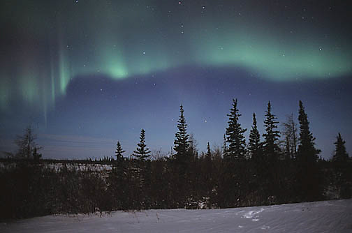 Aurora Borealis or Northern Lights near Churchill. Manitoba, Canada.
