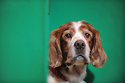 ©London News pictures. 10/03/11. Exhibitiors and their dogs at Crufts 2011 held at The National Exhibition Centre in Birmingham today (Thurs). The show runs from 10 - 13 March 2011 Picture Credit should read Stephen Simpson/LNP