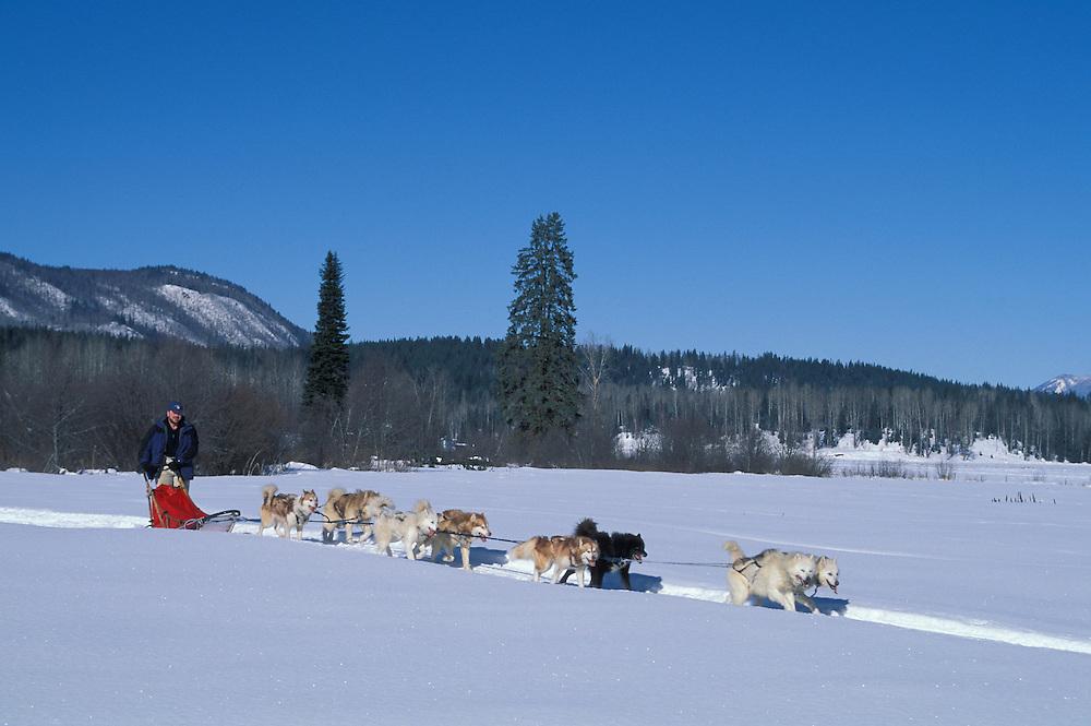 Dog Sledding, near  Wells Gray Provincal Park, British Columbia, Canada