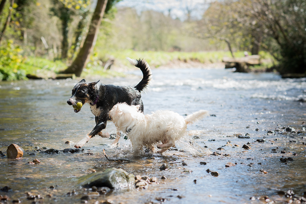 Pet photography for Dee Valley Waters' Annual Report, taken by commercial photographer Ioan Said.