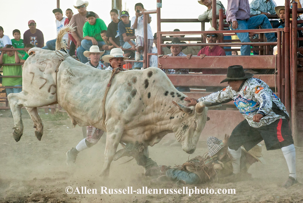 Crow Fair, Indian rodeo, Bull Rider, Bull Fighters protect rider, Montana, Chaz Bends, Brandon Lincoln, Jonah Red Cherries