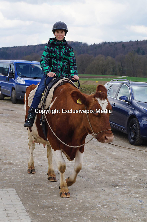 Slow moo-tion: The farm that lets visitors saddle up on COWS rather than horses (but treks can take a while as the bovines love to graze)<br /> <br /> Visitors to a farm in the Swiss Alps may be surprised to find that instead of saddling up on a horse - they get to ride cows.<br /> Bolderhof Farm offers guests the chance to clamber onto the back of one of the hoofed creatures for treks lasting up to half a day.<br /> The owner of the farm says that unlike horses, dairy cows are less likely to react to scenarios around them, meaning the risk of falling off is slim.<br /> <br /> Guests are able to get acquainted with their bovine in a short meet and greet, according to Smithsonian, before putting on a helmet and saddling up for the unusual experience.<br /> Despite their large size, the herbivores' speed ranges from 'slow to very slow' - perfect for enjoying the woods and rivers of the Rhine lowlands.<br /> In fact their pace is so glacial that rides in the past have been delayed by cows whose attention is more preoccupied with grazing rather than completing the journey.<br /> <br /> But what the experience does offer is a peaceful and stress-free amble through the beautiful rolling Swiss Alps. <br /> 'If something happens around you, the cow stands still and looks,' Bolderhof Farm owner Heinz Morgenegg told the Smithsonian. <br /> After a slow trek through the countryside, wannabe cowboys can enjoy a picnic spread of organic meat, cheese, bread and wine.<br /> <br /> The cow trekking experience started after Morgenegg queried what would happen if he climbed onto the back of one of his herd.<br /> As the bovine lay on the ground he clambered on, with the cow barely reacting to his rider. <br /> Years later, and the farm has cow trekking as a permanent attraction with people from all over the globe flocking to stroll on his prized animals.<br /> <br /> For those who aren't keen to hop on a cow, there are a range of other activities available on the farm. <br /> Guests can make cheese, milk cows,  saw wood, try farmhand skills and see the on-site water buffalo. <br /> After a day on the
