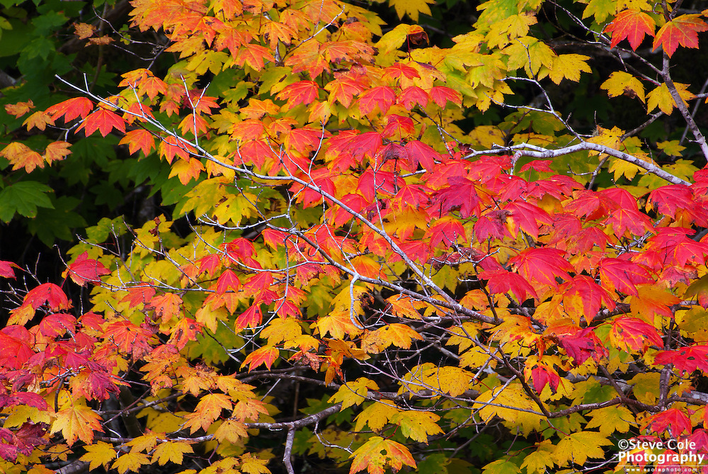 Fall Color #10 - Ross Lake National Recreation Area