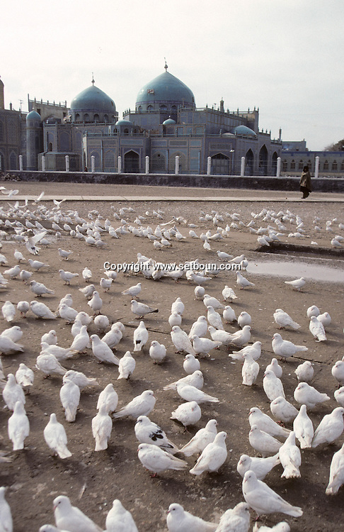 Afghanistan. White pigeon in front of the big MOSQUE of   Mazar I Sharif  Afghanistan  / Pigeons blanc devant la grande mosquée de Mazar I Sharif  Mazar I Sharif  Afghanistan