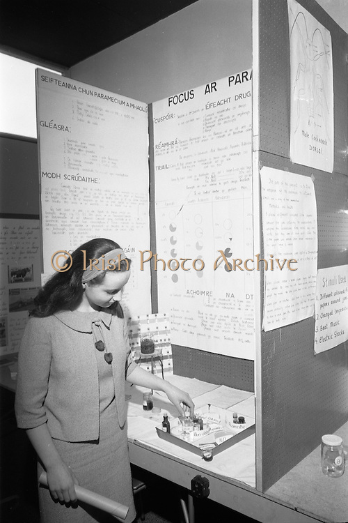 19/04/1968.04/19/1968.19th April 1968.Aer Lingus Young Scientist Exhibition ..Picture is the Young Scientist of the year Aingeal Maire Ni Riain from Clocher Lughhaidh Muineachan with her exhibit 'Focus Ar Paramecium'.