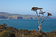 "Papatowai's slogan is ""Where the Forest Meets the Sea"", Catlins, New Zealand"