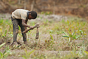 Alain Kouadio Kona, 10, who doesn't go to school, works in a field outside the village of Golikro, Bas-Sassandra region, Cote d'Ivoire on Monday March 5, 2012.