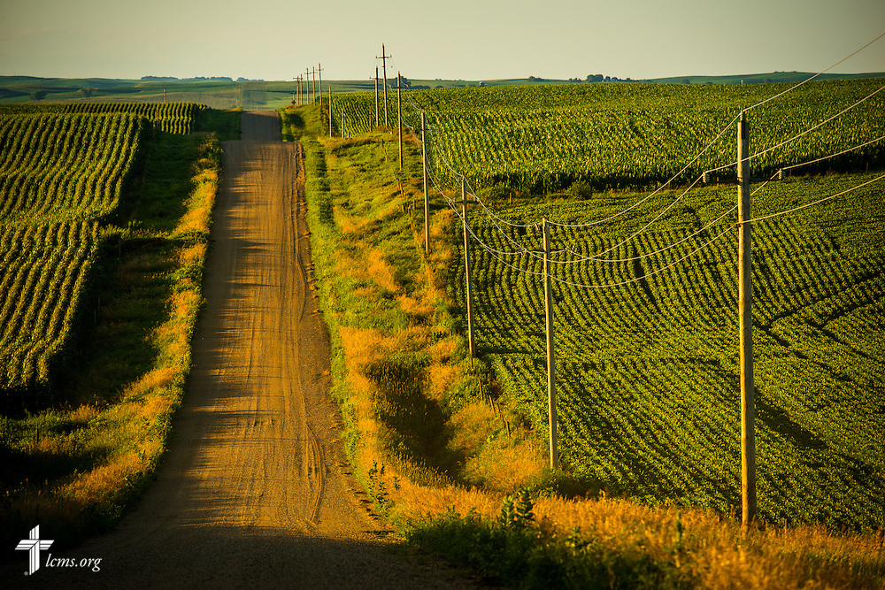 A gravel road is framed by cornfields near Mission Central on Saturday, July 18, 2015, in Mapleton, Iowa. LCMS Communications/Erik M. Lunsford