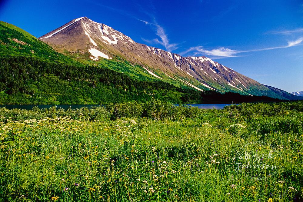 Field of Flowers at Carter Lake, Alaska