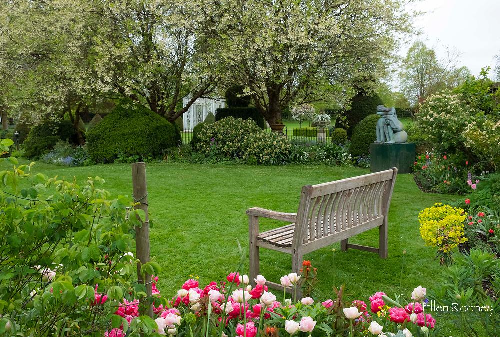 Tulipa 'Angelique' and Tulipa 'David Teniers' next to a teak garden bench at Chenies Manor Gardens, Rickmansworth, Buckinghamshire, UK, April
