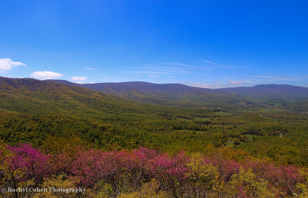 &quot;Purple Mountain Majesty&quot;<br /> <br /> Wonderful Red Bud blossoms and early spring leaves make a lovely scenic view of the Blue Ridge Mountains.<br /> <br /> The Blue Ridge Mountains by Rachel Cohen