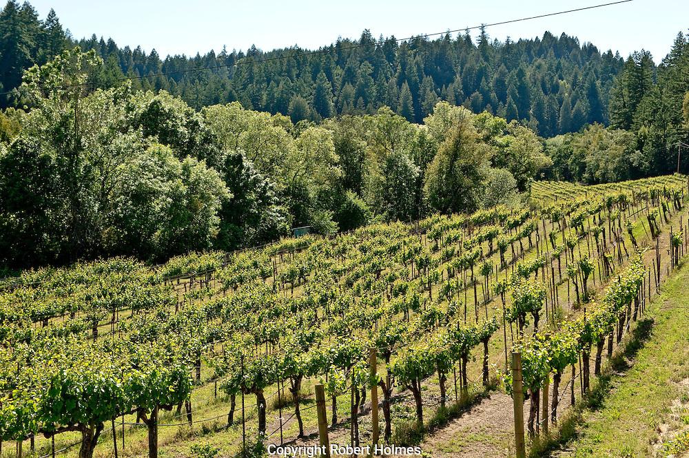 Hartford Family Winery, Green Valley, Sonoma County, California
