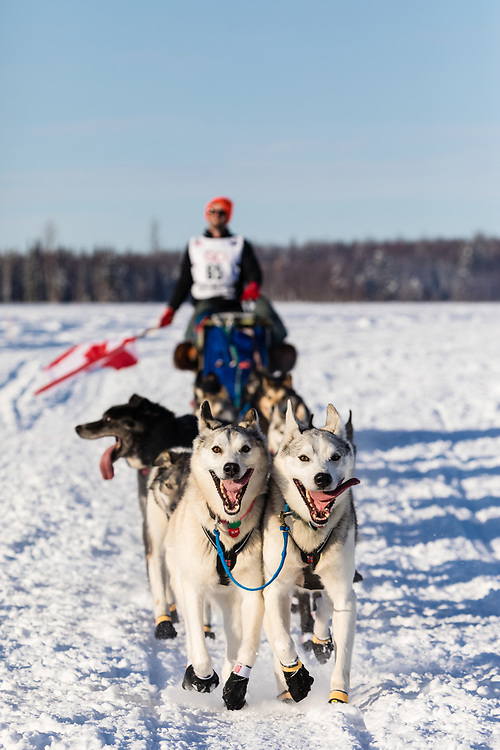 Musher Bradley Farquhar after the restart in Willow of the 46th Iditarod Trail Sled Dog Race in Southcentral Alaska.  Afternoon. Winter.