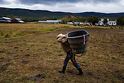 Organic farmer Joel Salatin carries water for cattle at Polyface Farms in Swoope, Virginia on Monday, October 3, 2011. Salatin is considered the quintessential organic farmer and he believes that many the nation's health and economic woes can be improved by going back to our farming roots.