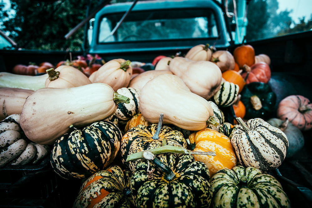 A farmers delivery of assorted squash.