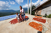 Laos, Luang Prabang Province. Drying red hot chili peppers.