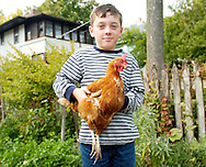 Hunter Standen holds Daisy in his backyard, his an Oak Park, IL. family has two chickens. ..