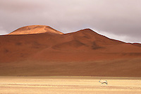 The lonely gembok bull sweeps through the dunes of Namib Desert. The gembok, the national wildlife symbol of Namibia, is totally adapted to the desert.