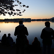 People line up along the waterfront of the still waters of the Tidal Basin before dawn during the blooming of the famous cherry blossoms in Washington DC.