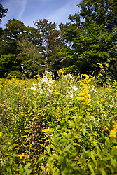 Wildflowers grow along the Pond Trail to the Pond, Weir Farm National Historic Site, former home of painter J. Alden Weir, Branchville, Connecticut.