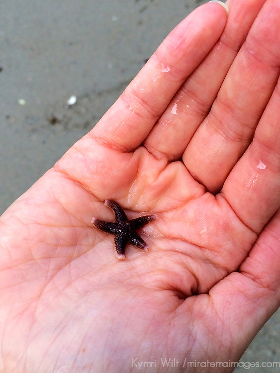 Europe, Norway, Lysefjord. A tiny starfish in a child's hand.